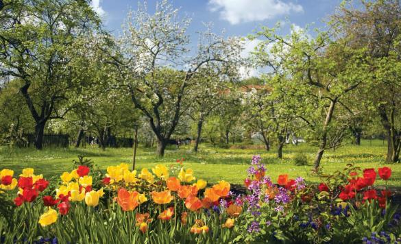 ciri ciri musim semi