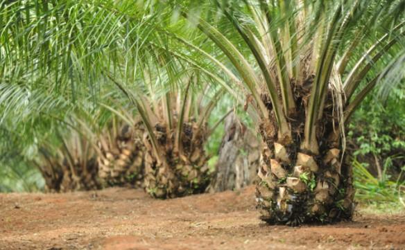 Hasil perkebunan kelapa sawit yang paling terkenal adalah di provinsi