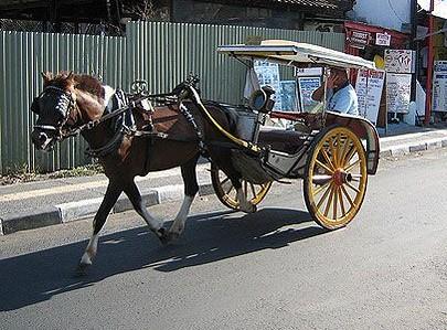Kereta kuda sewaan seperti dokar di Yogyakarta