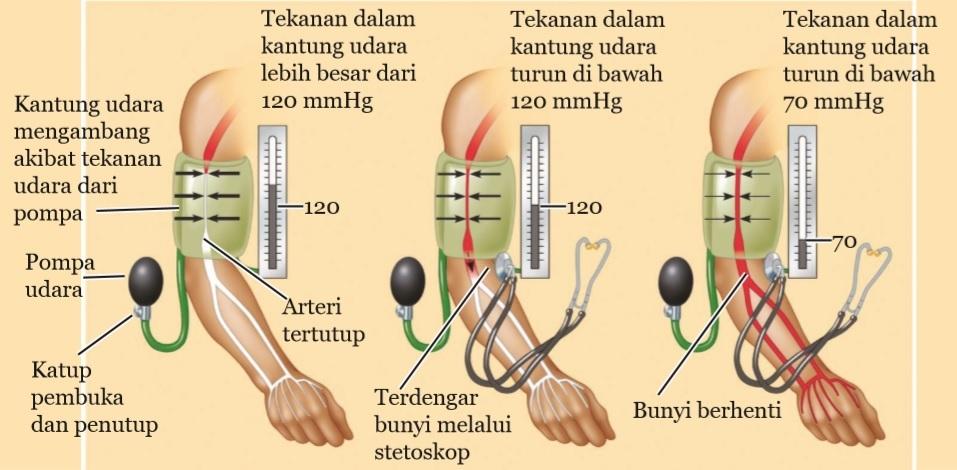 pada saat mengukur tekanan darah dengan tensimeter berlaku hukum