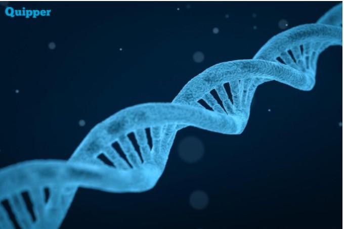 Apa yang dimaksud dengan DNA dan RNA