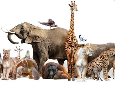 Sebutkan 10 hewan yang melahirkan