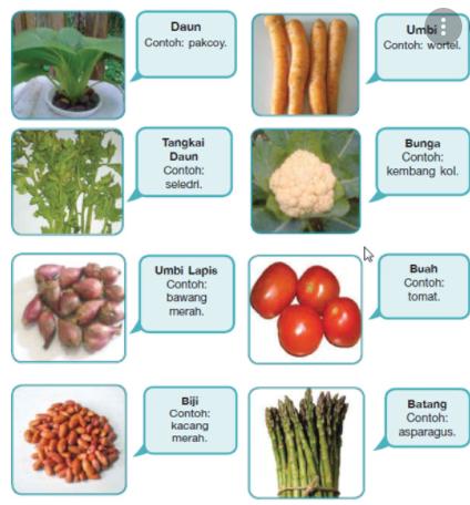 berdasarkan bagian tanaman yang dimakan sayuran dapat dibedakan menjadi 9 macam, sebutkan beserta contohnya masing-masing 2 macam