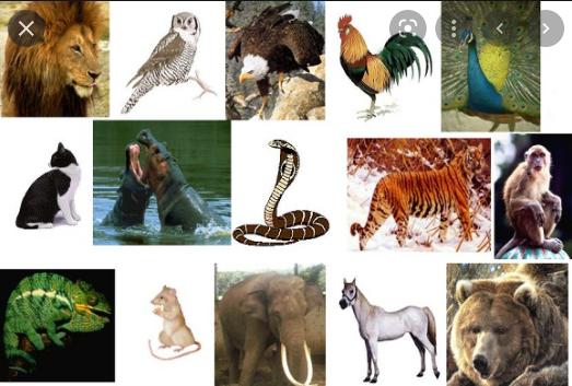 Apa yang dimaksud dengan mengklasifikasi makhluk hidup