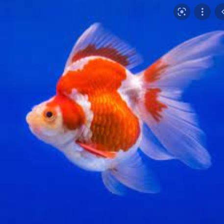 Ikan dapat bergerak cepat didalam air karena memiliki alat gerak berupa